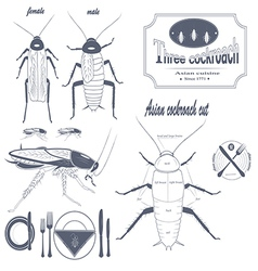 Asian cockroach vector