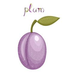 Fresh plum vector