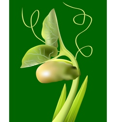 Bean sprout vector