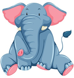 Young elephant vector