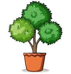 Pot with a plant vector