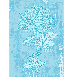 Chrysanthemum1 vector