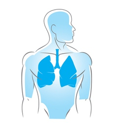 Internal organs lungs vector