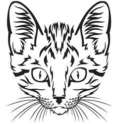 Kitten muzzle vector