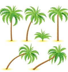 Coconut palms vector