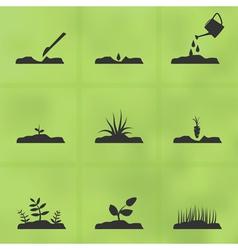 Grow a plant vector