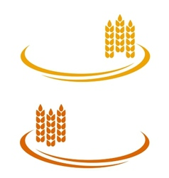 Wheat ears with decorative line vector
