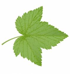 Currant leaf vector