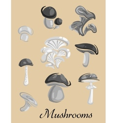 Edible and toxic forest mushrooms placard vector
