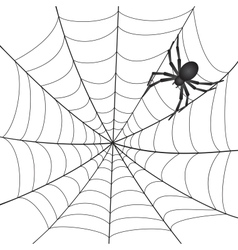 A spiderweb with spider vector