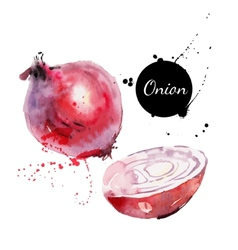Red onion hand drawn watercolor painting on white vector