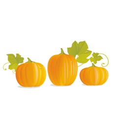 Pumpkins vector