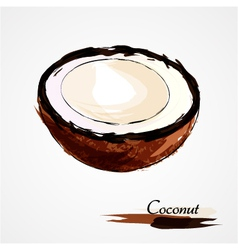 Coconut part portion vector