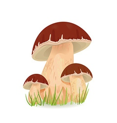 Edible mushroom porcini for you design vector