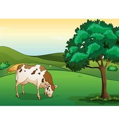 A cow eating grass vector
