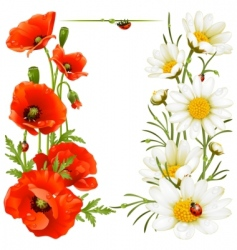 Poppy and chamomile vector
