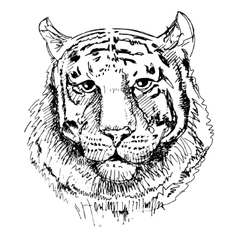 Artwork tiger sketch black and white drawing vector