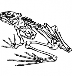 Skeleton of a frog vector