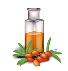 Sea buckthorn branch with berries and bottle of oi vector
