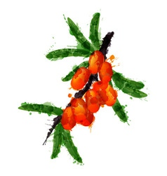 Sea buck thorn made of colorful splashes vector