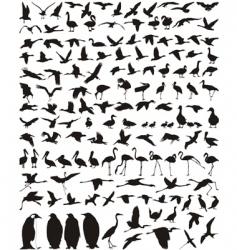 Waterfowl vector