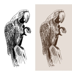 Original artwork parrot black sketch drawing bird vector