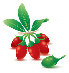 Goji berries vector
