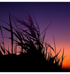 Sunset and grass silhouette vector