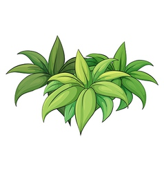 Plant on white background vector