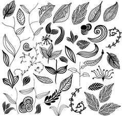 Leaf variation vector