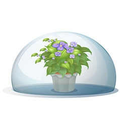 A dome with a pot with plant vector