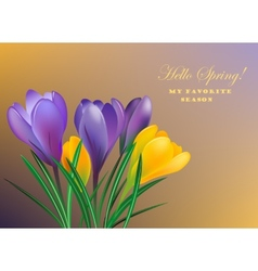 Spring crocuses vector