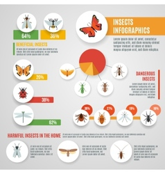 Insects infographic set vector
