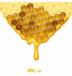 Flowing honey vector