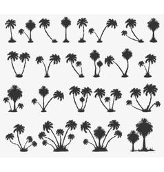 Set of solar palm beach vector