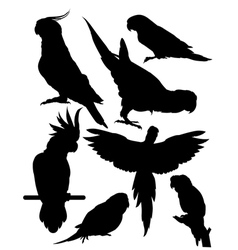 Silhouettes of parrots vector