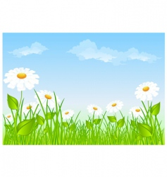 Field of daisies vector