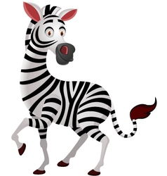 Zebra cartoon isolated vector