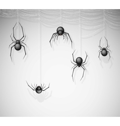 The spiders vector