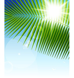 Palm leaf1 vector