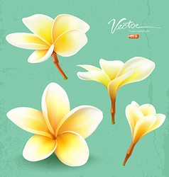 Frangipani thailand flower collections vector