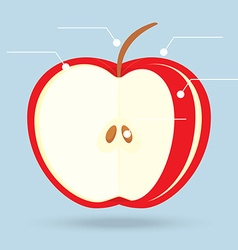 Apple slices structure diagram isolated on vector