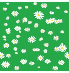Seamless daisies background vector