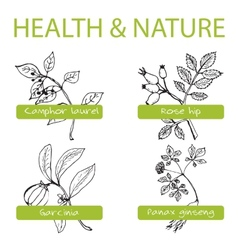 Handdrawn set - health and nature vector