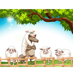 Group of sheeps with a wolf vector