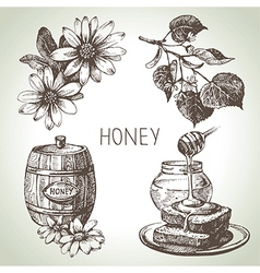 Hand drawn sketch honey set vector