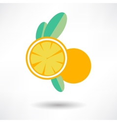 Icon orange fruit isolated on white background vector
