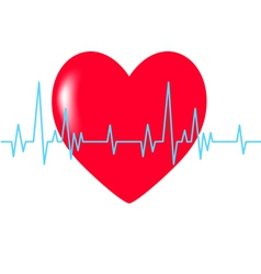 Heart red cardiogram blue vector