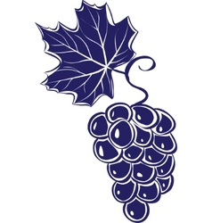 Of grapes vector illustration vector