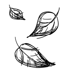 Stylized leaves sketch vector
